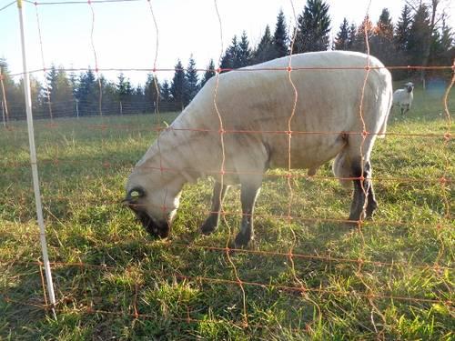 Afsluiting met een stroomvoerend schapennet, flexinet of elektronet