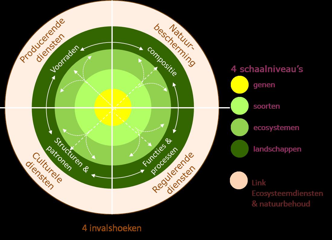 Biodiversiteit: invalshoeken en schaalniveau's