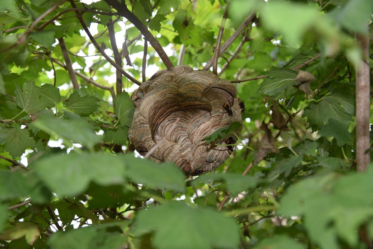 Primair nest