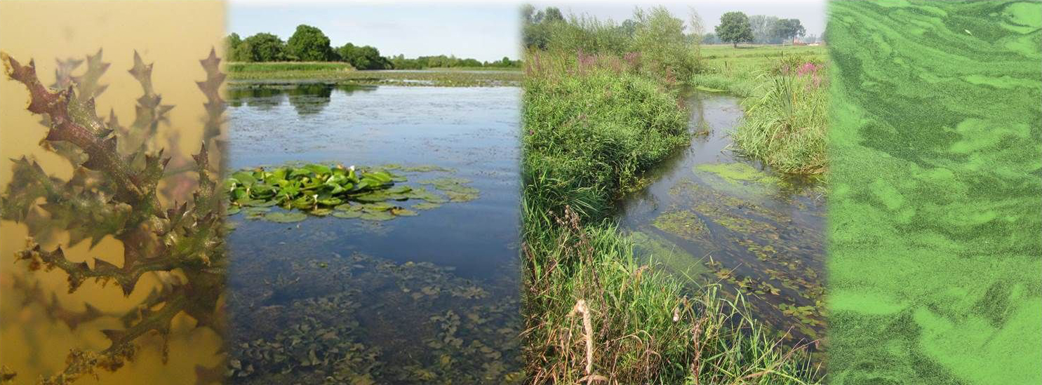 beeld bij zoetwaterhabitats