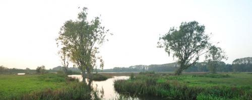 Natuurreservaat Bourgoyen (foto Yves Adams / Vildaphoto)