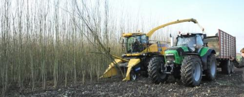 oogsten van korteomloophout