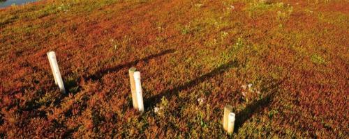 Peilbuizen in de Dudzeelse polder (foto Yves Adams / Vildaphoto)