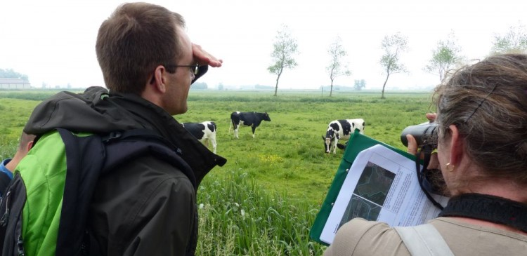foto karteerders aan grasland