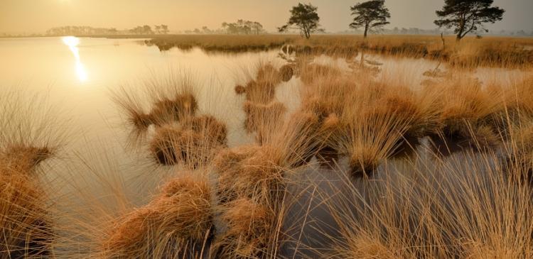 Foto van Kalmthoutse Heide