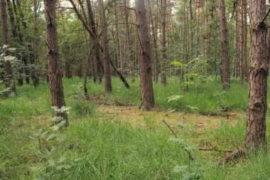 beeld uit bosreservaat