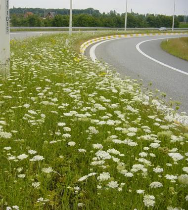 foto bloemen op berm