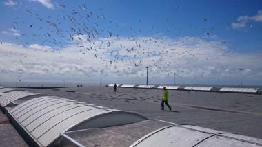 dak van industrieel gebouw en zeevogels