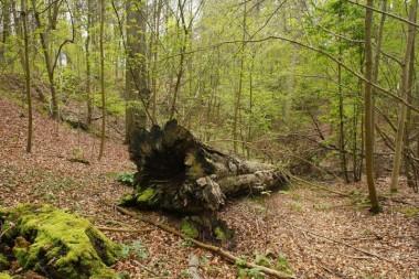 photo biodiversity