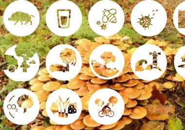 beeld ecosysteemdienstenrapport 2014