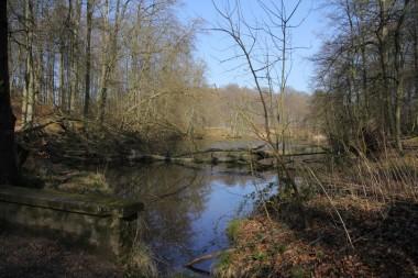 Foto van vijver in bos