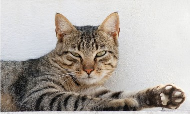 foto van kat