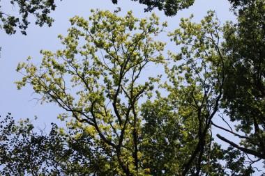 foto van boomkruin