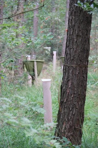 Foto van proefopstelling in bos