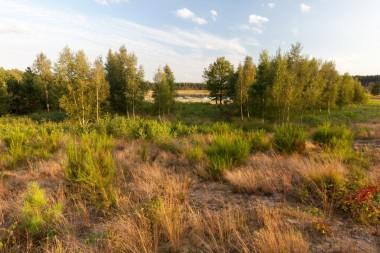 foto van natuurgebied