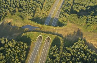 Ecoduct Kikbeek - foto Yves Adams / Viildaphoto