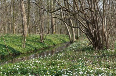 Nieuw bos (foto INBO)
