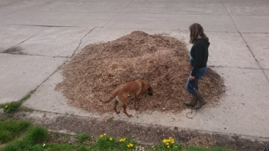 foto van snuffelhond