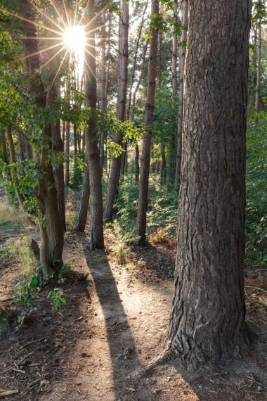 Wandelpad in bos (foto Jeroen Mentens / Vildaphoto)