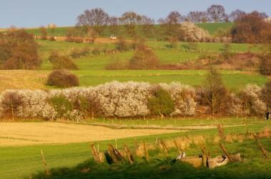 Foto van landbouwlandschap