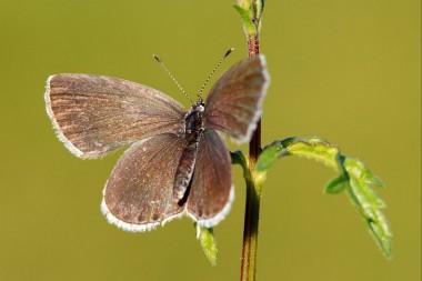 foto van vlinder