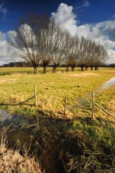 Foto wetland