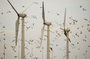 foto van windmolenes en vogels