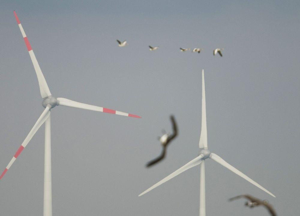 Foto van vogels en windturbines
