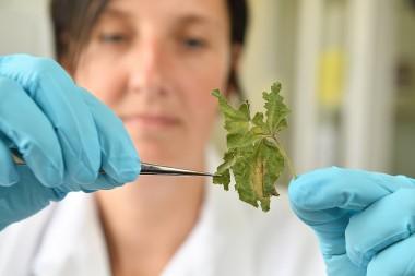 foto staalname in genetisch laboratorium