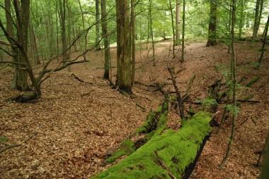 foto van bosreservaat