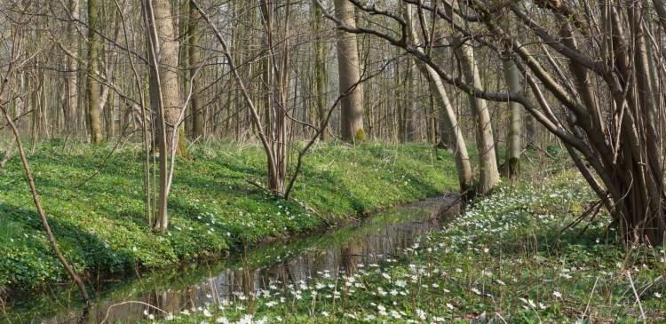Foto van oud en nieuw bos