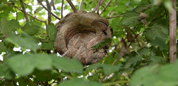 Foto primair nest