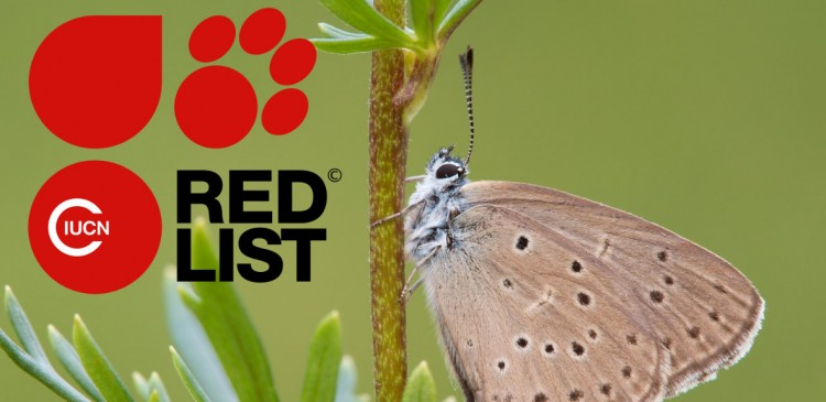 Butterfly and IUCN RedLists logo