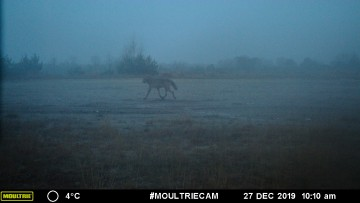 Eerste foto van Noëlla in leefgebied August - INBO/ANB