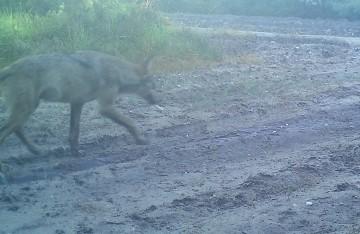 forto van wolf