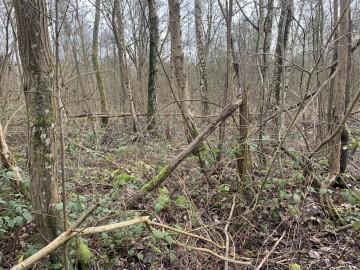 Bos in gebied - foto INBO
