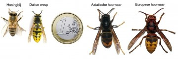 Hoornaar vergelijking euro