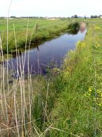 Polderlandschap (foto INBO)