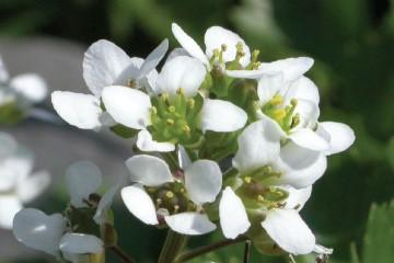 Foto van bloem