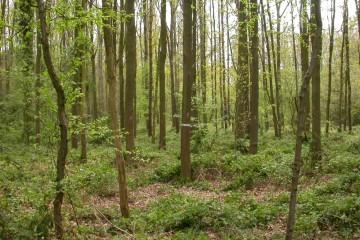 foto van bos