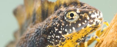 foto soortenbeschermingsplan