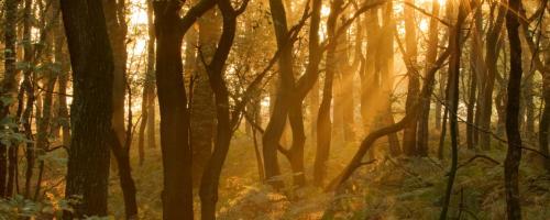 foto beheer van bos