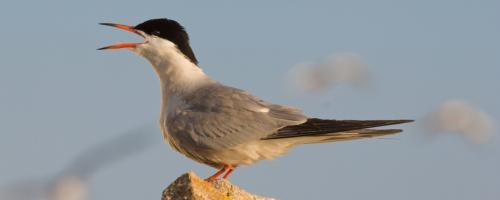 foto watervogels