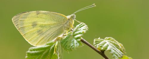 foto insecten