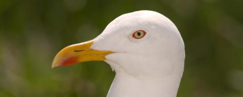 foto zee- en kustvogels