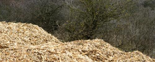 Foto Biomassa