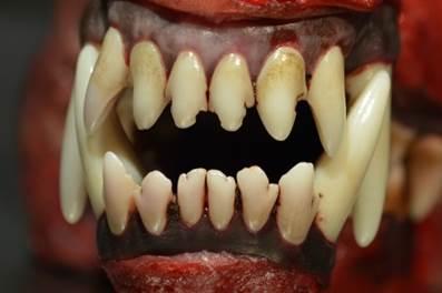 tanden roger