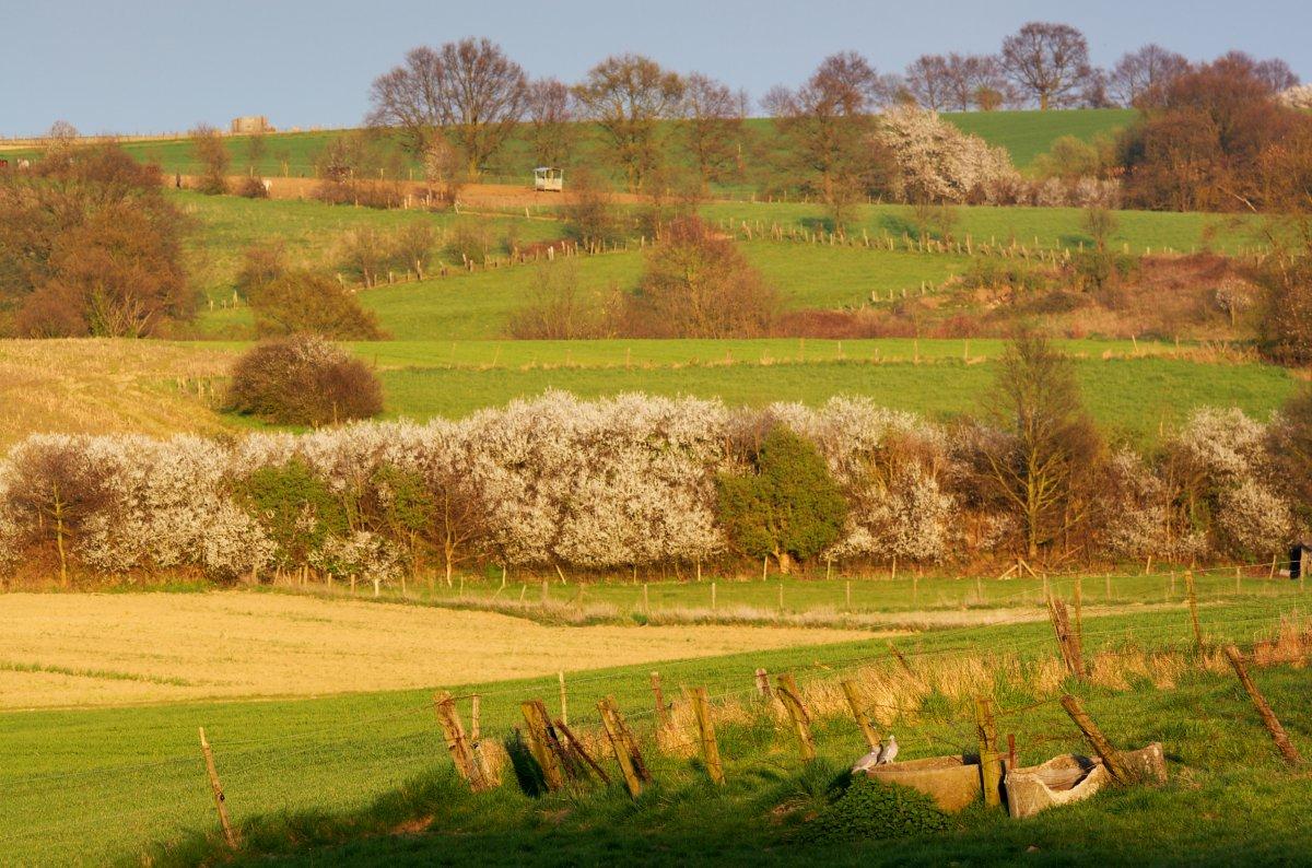 Landbouwlandschap (foto Jeroen Mentens / Vildaphoto)